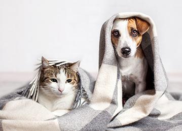 Evcil Hayvanınızı Sigorta İle Güvenceye Alın