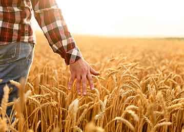 Tarımcılıkta Üretimsel Sorunların Çözümü: Tarım Sigortası